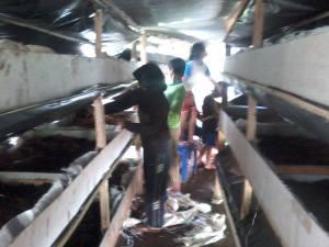 Anak-anak di Brau semangat beternak cacing (dok. Yabule)